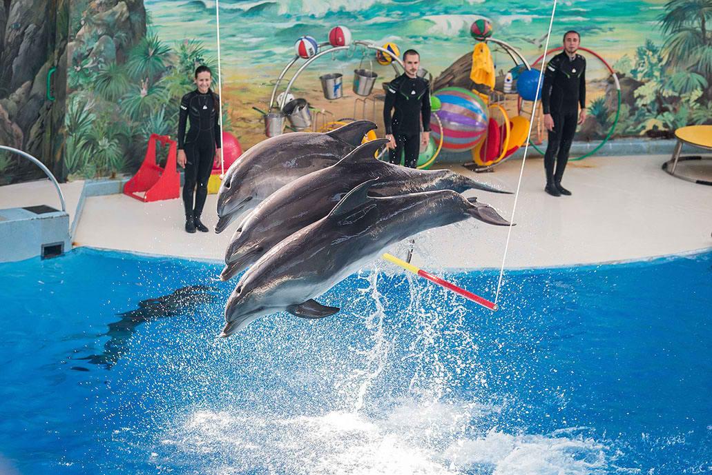 Дельфинарий в Сочи, Ривьера парк